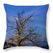 Centenary Chestnut At Blue Hour Throw Pillow