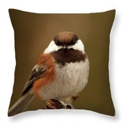 Chestnut-backed Chickadee  Throw Pillow