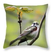 Chestnut Sided Warbler 2 Throw Pillow