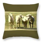 Cheviot Sheep Throw Pillow