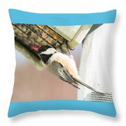 Chicadee At Suet Throw Pillow