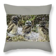 Chick Burrowing Owl  Throw Pillow