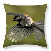 Chickadee In Flight Throw Pillow
