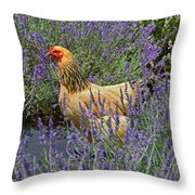 Chicken In The Lavender Throw Pillow