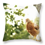 Chicken On Fence Throw Pillow