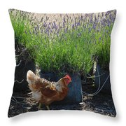 Chicken With Lavender  Throw Pillow
