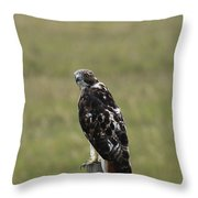 Chickenhawk Throw Pillow