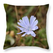 Chicory Blue Throw Pillow