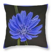 Chicory Flower Throw Pillow