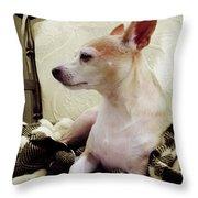 Chihuahua Chiqui Portrait 3 Throw Pillow