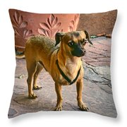 Chihuahua - Dogs Throw Pillow