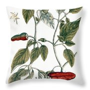 Chili Pepper, 1735 Throw Pillow
