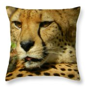 Chillin In The Afternoon Sun Throw Pillow
