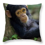 Chimpanzee Pan Troglodytes Baby Leaning Throw Pillow