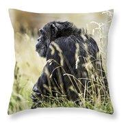 Chimpanzee Sitting In The Grass Throw Pillow
