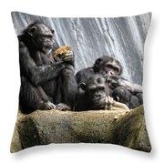 Chimpanzee Snacking On A Sunflower Throw Pillow