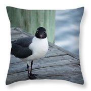 Chincoteague Island - Great Black-headed Gull Throw Pillow