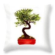 Chinese Elm Bonsai Tree Throw Pillow