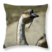 Chinese Geese Anser Cygnoides At Zoo Throw Pillow