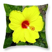 Chinese Hibiscus Throw Pillow