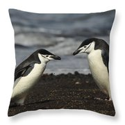 Chinstrap Penguin Duo Throw Pillow
