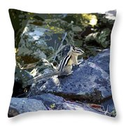 Chipmunk Art #1 Throw Pillow by Ben Upham III