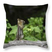 Chipmunk In South Lake Tahoe  Throw Pillow