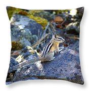 Chipmunk On The Rocks Throw Pillow