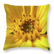 Chipmunk Planting - Sunflower Throw Pillow