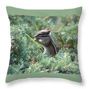 Chipmunk With Bokeh Throw Pillow