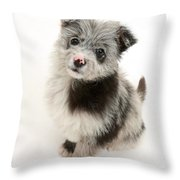 Chipoo Puppy Throw Pillow