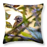 Chipping Sparrow In The Brush Throw Pillow