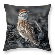Chipping Sparrow Throw Pillow