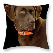 Chocolate Lab Throw Pillow by William Jobes