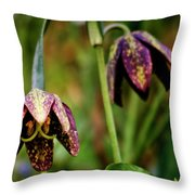 Chocolate Lily Throw Pillow