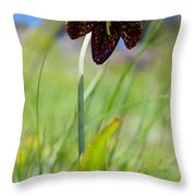 Chocolate Lily Two Throw Pillow