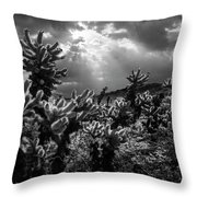 Cholla Cactus Garden Bathed In Sunlight In Black And White Throw Pillow