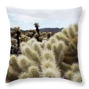 Cholla Cactus Garden Landscape Throw Pillow