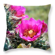 Cholla In Bloom Throw Pillow