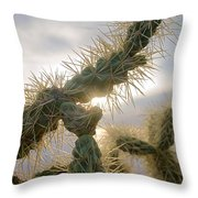 Cholla, Organ Pipe National Monument, Az  January 2015 Throw Pillow