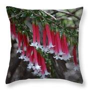Christmas Bells 1 - Australian Native Fuchsia Throw Pillow
