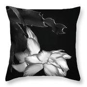 Christmas Cactus 8938bw Throw Pillow