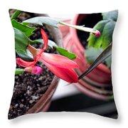 Christmas Cactus Bloom Throw Pillow