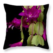 Christmas Cactus Purple Flower Blooms Throw Pillow by James BO  Insogna