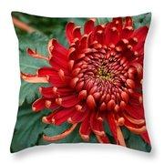 Christmas Chrysanthemum Throw Pillow