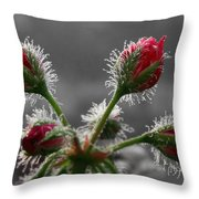 Christmas In May Throw Pillow by Lori Deiter