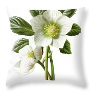 Christmas Rose Floral Illustration Throw Pillow