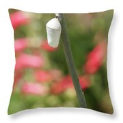 Chrysalis On A Summer Day Throw Pillow
