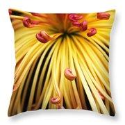 Chrysanthemum Morning Throw Pillow