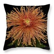 Chrysanthemum 'senkyo Kenshin' Throw Pillow